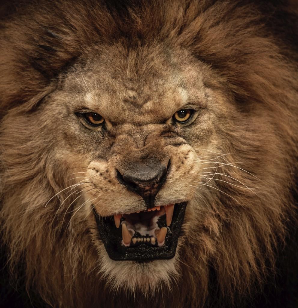 Not Aslan.